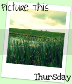 Picture This Thursday